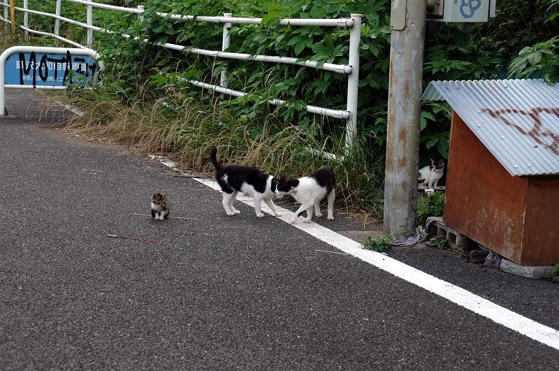 仔猫たちが群れている