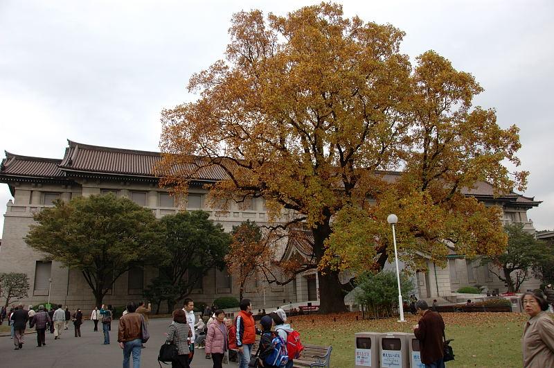 博物館の庭の大樹
