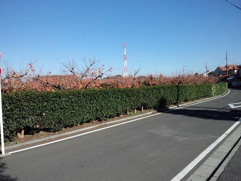 近所の農園