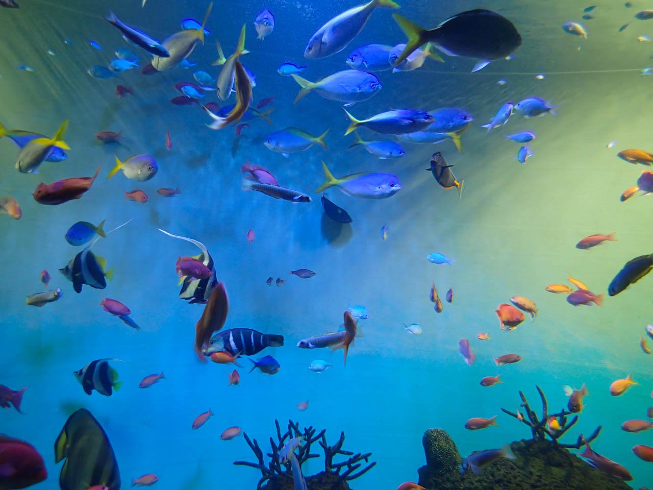 温かい海の魚を集めた水槽