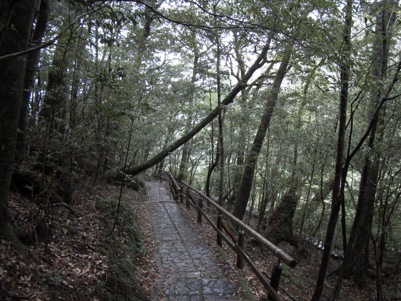 概ね整地した道か、木道